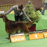 2,5 years old at CACIB Głogów 2012