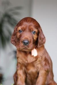 Orange girl 4,5 weeks