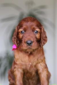 Pink girl 4,5 weeks