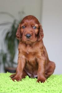 Purple boy 4,5 weeks